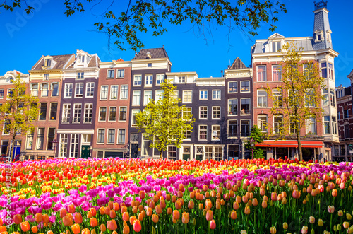 Keuken foto achterwand Amsterdam Traditional old buildings and tulips in Amsterdam, Netherlands