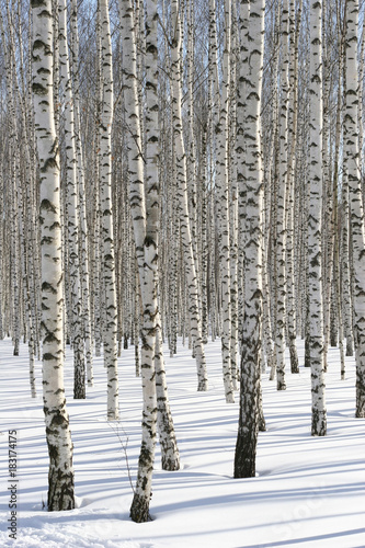 Winter Forest - 183174175