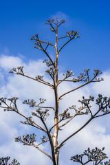 Dry tree on sky background