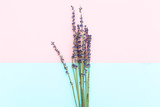 Twigs of lavender on a pink-blue background. Minimalism - 183176727