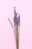 Twigs of lavender on a pink background. Minimalism - 183176732