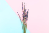 A bouquet of lavender on a pink-blue background. Minimalism - 183176733