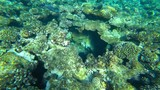 fish and coral reef - 183177176
