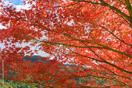Deurstickers Koraal 河内貯水池 秋の紅葉