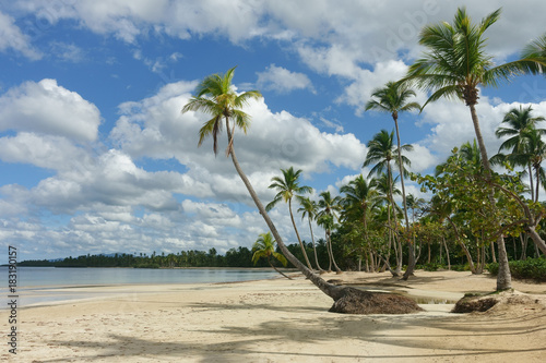 Aluminium Beige Beautiful natural tropical beach with palm trees, Samana, Dominican Republic