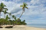 Beautiful tropical beach with palm trees, Samana, Dominican Republic - 183190769