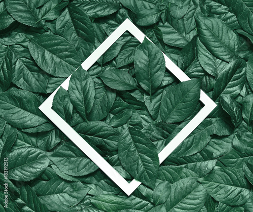 In de dag Natuur Creative layout made of leaves with paper frame. Flat lay. Nature concept