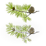 Pine tree Branch and pine cone autumnal and winter snowy vintage  natural background vector illustration editable hand draw - 183198953