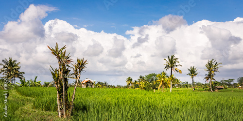 Papiers peints Bali Tin House in Rice Fields Bali, Indonesia