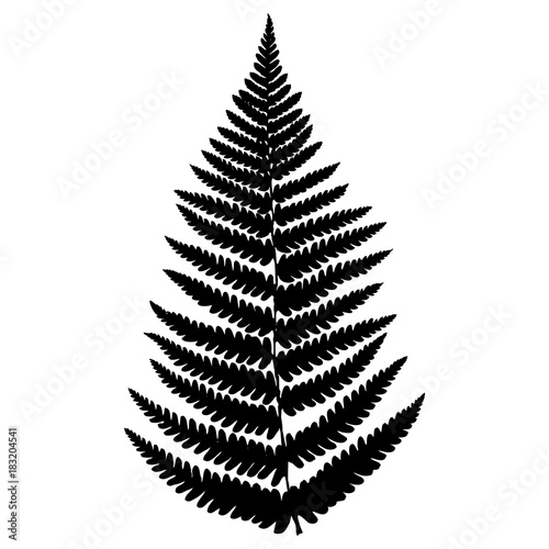 Fern leaf. Black isolated silhouette on white background. Vector illustration. - 183204541