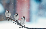 funny little birds sitting on a branch in the snow on Christmas day - 183212707