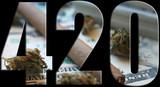 Marijuana 420 Logo With Blunt, Bud & Money Inside Logo High Quality