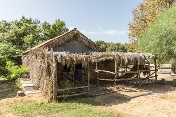 a hut of dry leaves