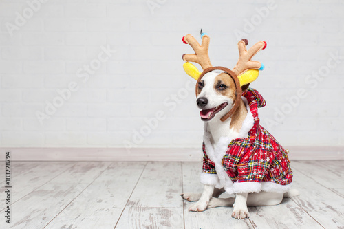 Dog in a christmas costume