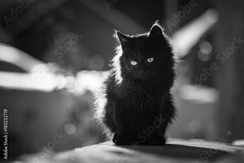 Czarno-biały podświetlany kot
