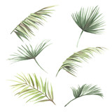 Set with palm leaves. Hand draw watercolor illustration. - 183260359