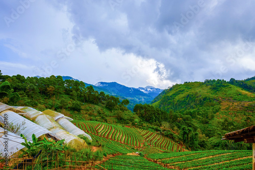 Plexiglas Blauwe hemel high mountains peaks range clouds in fog scenery landscape national park view outdoor at Doi Ang Khang, Chiang Mai Province, Thailand