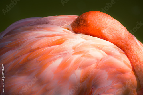 Pink Feathers Poster