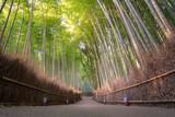 Beautiful nature bamboo forest in autumn season at Arashiyama in Kyoto, Japan. - 183275344