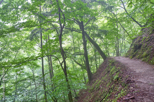 Plexiglas Olijf 西沢渓谷の森