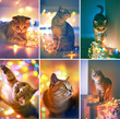Collage. Cat and Christmas lights