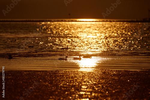 Plexiglas Chocoladebruin 琵琶湖水鳥公園の夕景