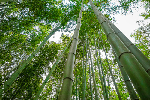 Foto op Canvas Kyoto Arashiyama bamboo forest, Kyoto, Japan