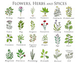 Set of spices, herbs and officinale plants icons. Healing plants. - 183291523