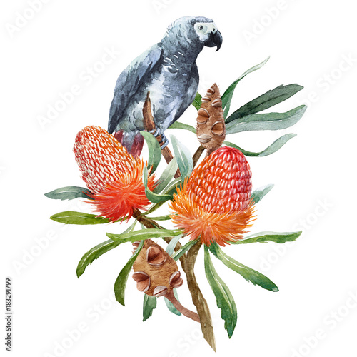 Watercolor banksia flower composition - 183291799