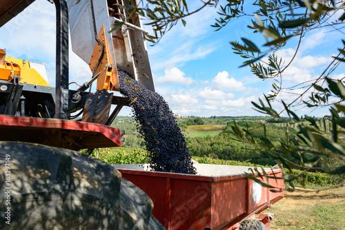 Papiers peints Toscane Die gepflückten Trauben werden zum Transport verladen