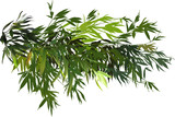 green bamboo branches group isolated on white