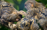 Primates cleaning eachother - 183306197