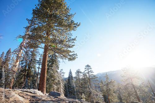 Aluminium Galyna A. Yosemite