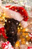 Black dog in santa cap - 183327781