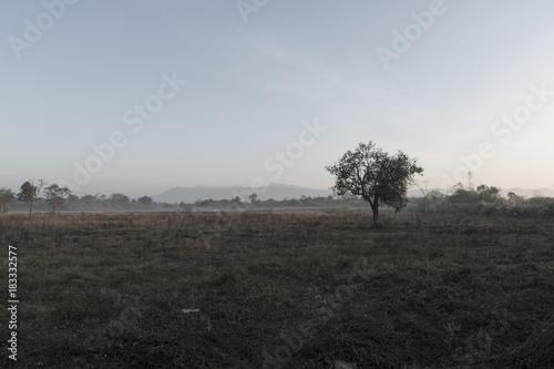 Fotobehang Grijze traf. Winter with field