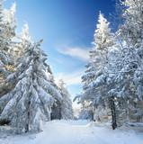 verschneiter Rennsteigweg