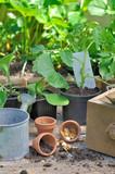 seeds, seedlings growing in pots on a plank