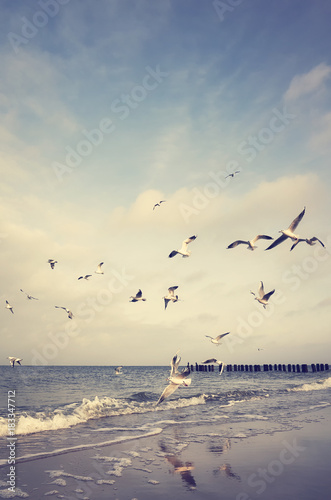 Vintage stylized picture of flying birds at a beach - 183347712