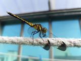 Dragonfly - 183351593