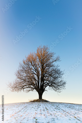 Lonely winter tree in the sunset Poster