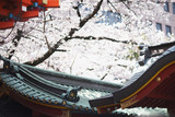 The roof of the Shinto temple against the background of cherry blossoms. Japan - 183364951