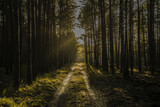 Forest road in Autumn - 183374389