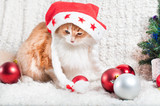 A funny cat in a Santa Claus hat, a Christmas card, a banner for a veteran clinic. - 183377747