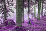 Fantasy colored forest. Purple tone corrected image. - 183382115