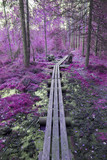 Fantasy colored forest. Purple tone corrected image. - 183382130
