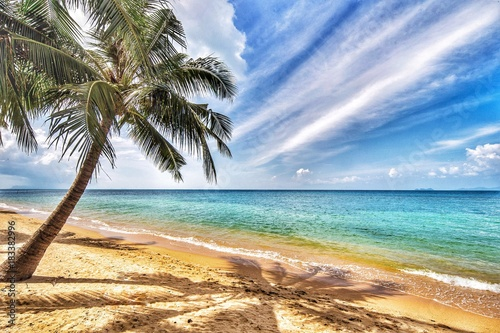 Foto op Canvas Tropical strand Palm Tree at the beach in Ko Samui, Thailand