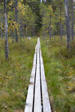Wooden duckboards in the Finnish forest, swamp area. Autumn hiking. - 183385786
