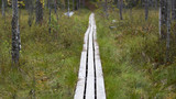 Wooden duckboards in the Finnish forest, swamp area. Autumn hiking. - 183385796