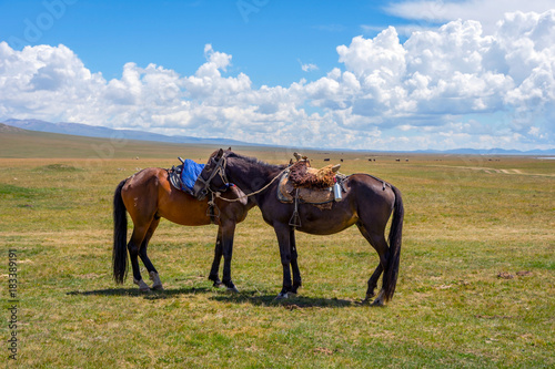 Horses with saddle resting