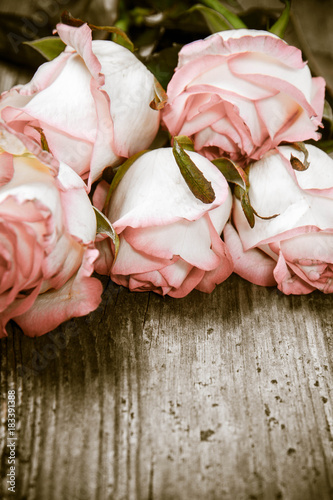 White pink roses on a wooden background